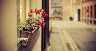 city-street-flowers-photo-hd-wallpaper